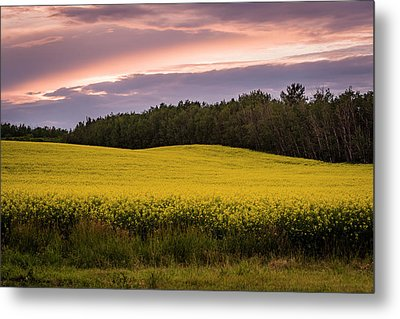Metal Print featuring the photograph Canola Crop Sunset by Darcy Michaelchuk
