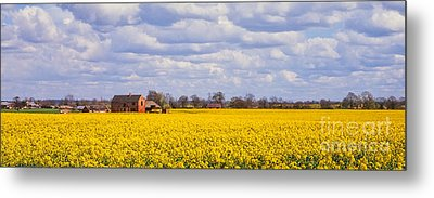 Canola Field Metal Print by John Edwards