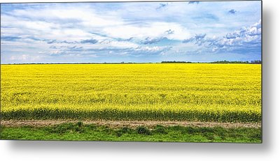 Canola Field - Photography Metal Print by Ann Powell
