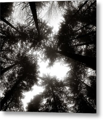 Canopy Metal Print by Dave Bowman