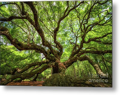 Canopy Of Color At Angel Oak Tree  Metal Print