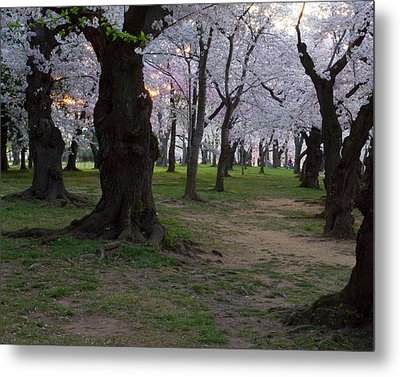 Canopy Of Pink 8x10 Metal Print