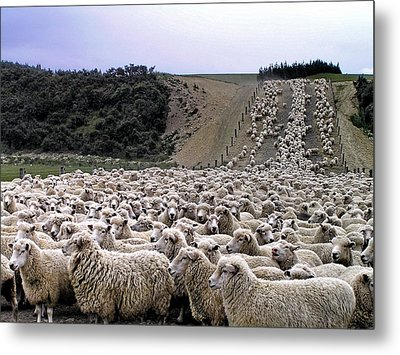 Metal Print featuring the photograph Cant Sleep - Count Sheep by Phil Stone