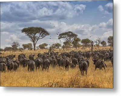 Metal Print featuring the tapestry - textile Cape Buffalo Herd by Kathy Adams Clark
