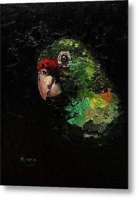 Captain The Parrot Metal Print