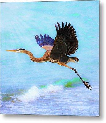 Captiva Crane In Flight Metal Print