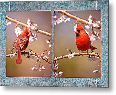 Cardinal Collage Metal Print by Angel Cher