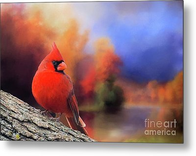 Cardinal In Autumn Metal Print