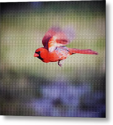 Cardinal In Flight- Paint Fx Metal Print
