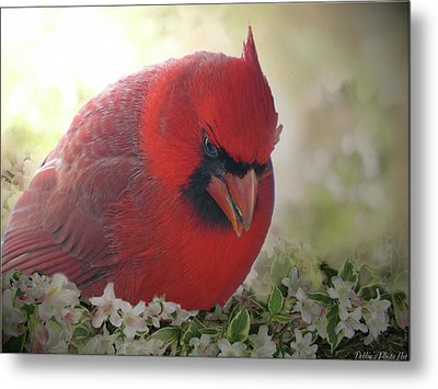 Metal Print featuring the photograph Cardinal In Flowers by Debbie Portwood