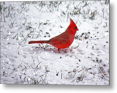 Cardinal In The Snow Metal Print by Suzanne Stout
