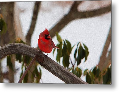 Cardinal In Winter Metal Print by Jeff Folger