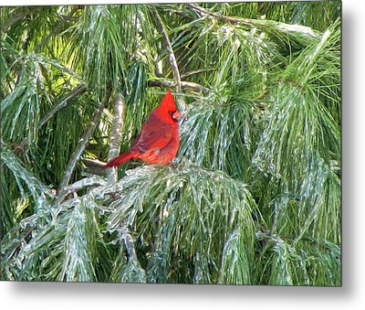 Cardinal On Ice Metal Print by John Freidenberg