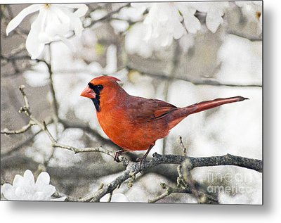 Metal Print featuring the photograph Cardinal Spring - D009909-a by Daniel Dempster