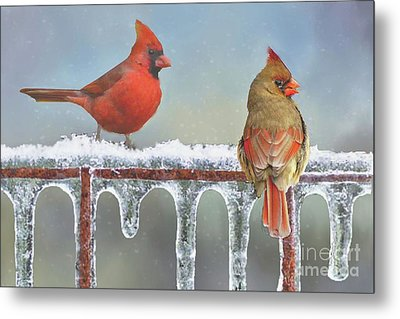 Cardinals And Icicles Metal Print