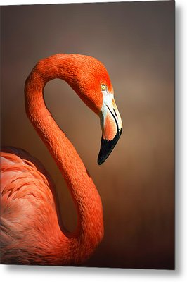 Caribean Flamingo Portrait Metal Print by Johan Swanepoel