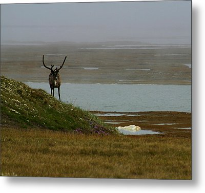 Caribou Fog Metal Print by Anthony Jones