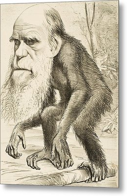 Caricature Of Charles Darwin Metal Print by English School