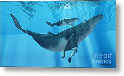Caring Mother Humpback Metal Print by Corey Ford