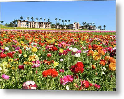 Metal Print featuring the photograph Carlsbad Flower Field by Dung Ma
