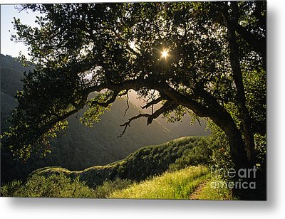 Carmel-valley-32-20 Metal Print by Craig Lovell
