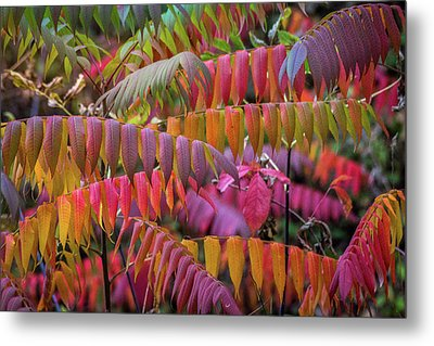 Metal Print featuring the photograph Carnival Of Autumn Color by Bill Pevlor
