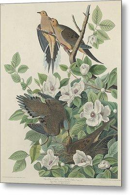 Carolina Pigeon Or Turtle Dove Metal Print by Dreyer Wildlife Print Collections