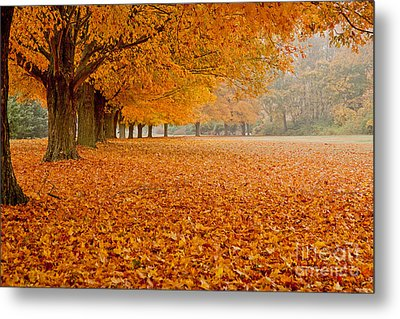March Of The Maples Metal Print