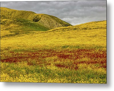 Metal Print featuring the photograph Carrizo  Plain Super Bloom 2017 by Peter Tellone