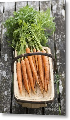 Carrots Metal Print by Tim Gainey