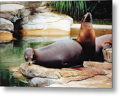 Carry That Weight Metal Print by Jan Amiss Photography