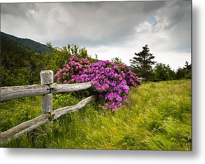 Carvers Gap Roan Mountain State Park Highlands Tn Nc Metal Print by Dave Allen
