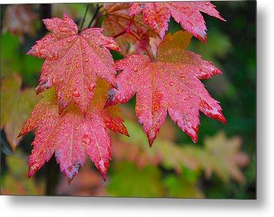 Cascade Autumn Leafs 5 Metal Print by Noah Cole