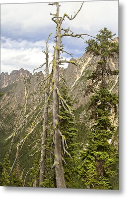 Cascades Tree Metal Print by Peter J Sucy