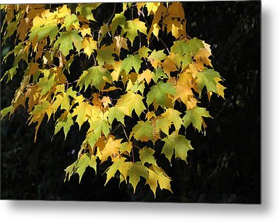 Metal Print featuring the photograph Cascading Leaves by Doris Potter
