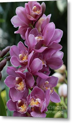 Cascading Orchids Metal Print