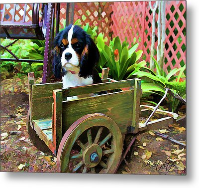 Casey In The Cart Metal Print by Patricia Stalter