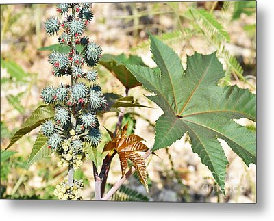 Metal Print featuring the photograph Castor Oil Plant by Ray Shrewsberry
