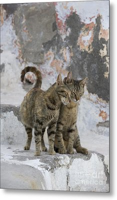 Cat And Her Kitten Metal Print by Jean-Louis Klein & Marie-Luce Hubert
