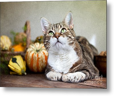 Cat And Pumpkins Metal Print by Nailia Schwarz
