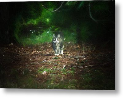 Cat - Baxter - Play Time Metal Print by Black Brook Photography