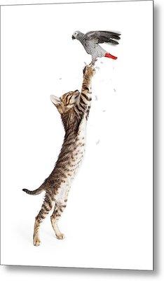 Cat Catching Bird In Flight Metal Print