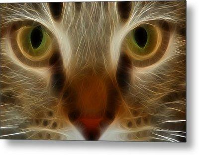 Cat Eyes Metal Print by Kathleen Stephens