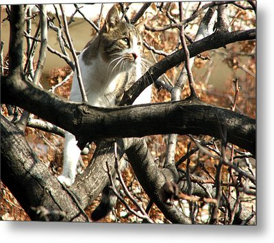 Cat Hunting Bird Metal Print