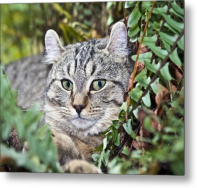 Cat In A Fern Metal Print by Susan Leggett