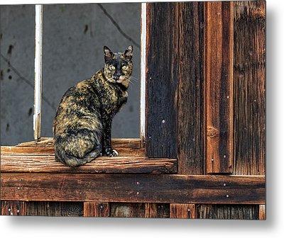 Cat In A Window Metal Print by Scott Warner