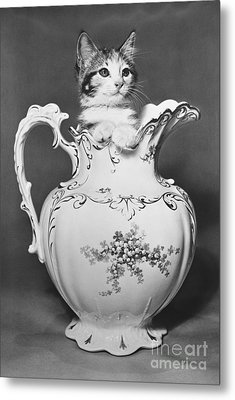 Cat In Pitcher Metal Print by Larry Keahey