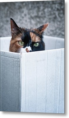 Metal Print featuring the photograph Cat In The Box by Laura Melis
