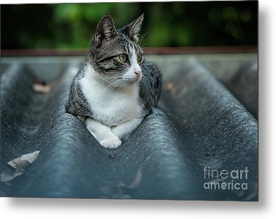 Cat In The Cradle Metal Print