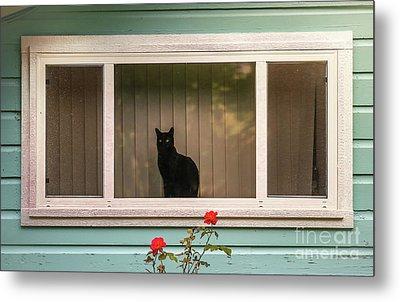 Cat In The Window Metal Print by Robert Frederick